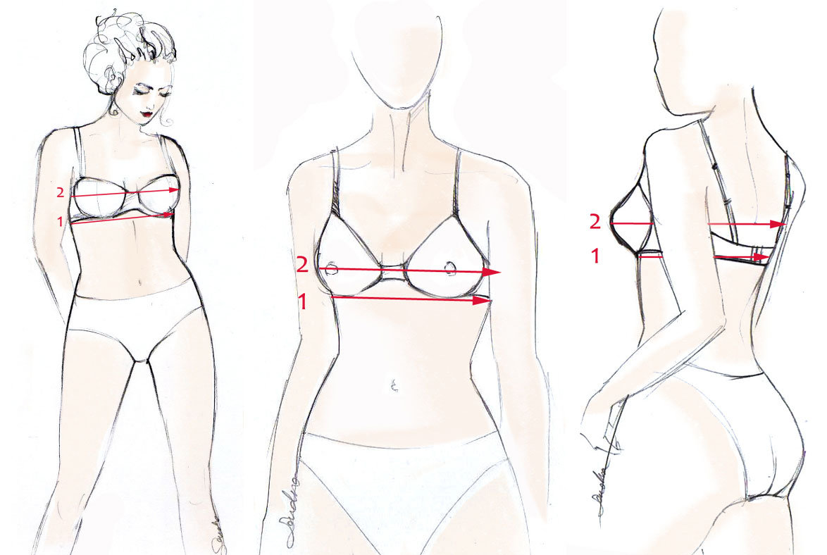 The Basic Bra Measurement Chart